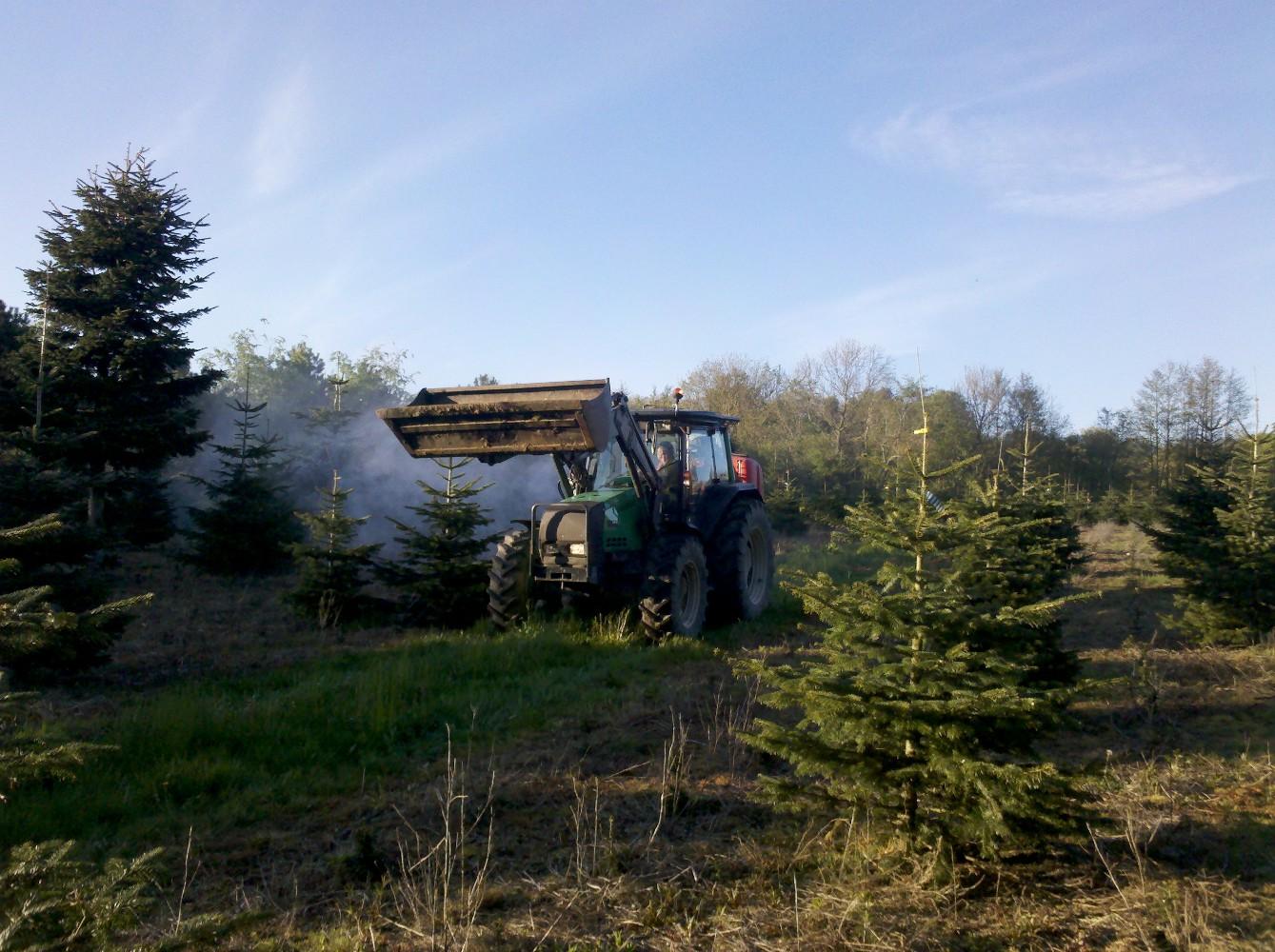 juletræer dyrkning